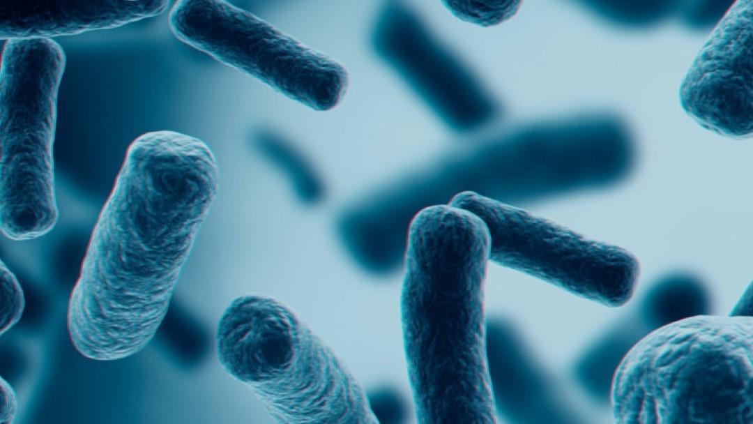 Corrélation entre MTC microbiote et le SARS-COV-2